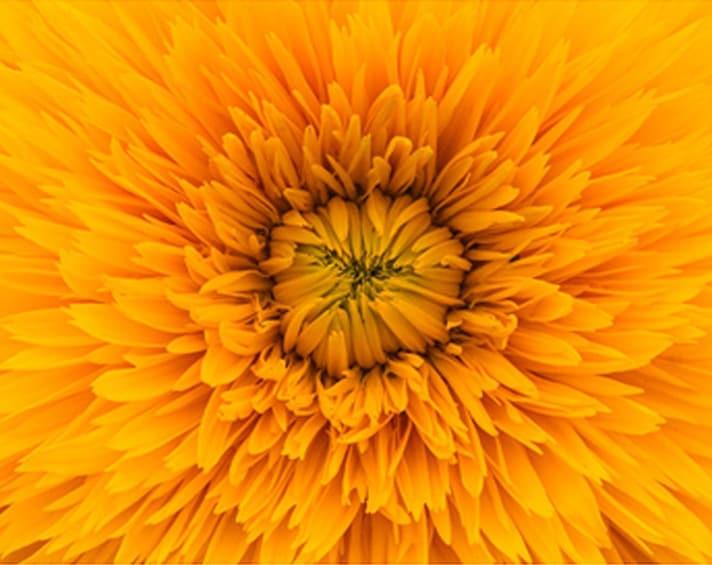 img-yellow-flower